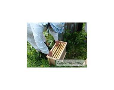 продам бджолопакети карпатської породи бджіл