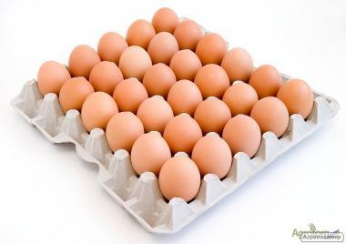 Яйцо куриное от производителя.
