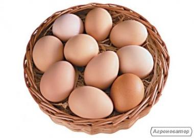 Яйца категории c-1 производства холдинга
