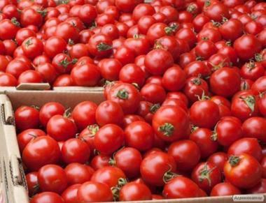 Продам помидор на переработку