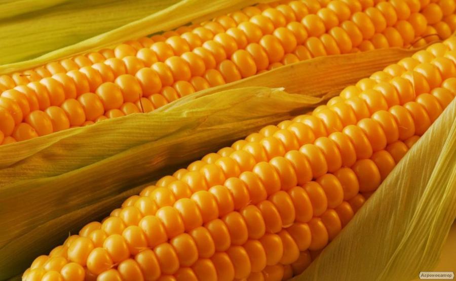 Продам семена гибридов кукурузы Оржица, Солонянский, Пивиха, Полтава