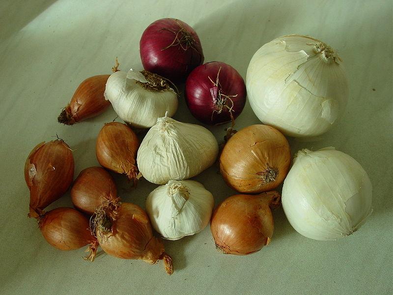 Цибуля севок (тиканка)