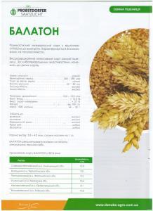 Насіння озимої пшениці Балатон