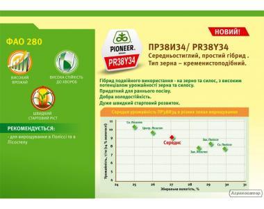 Гібрид кукурудзи ПР38И34 ФАО 300