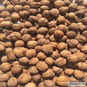 Куплю і Продам грецкий горіх, цілий та ядро.