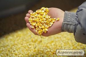 Желтая Кукуруза FOB Черное море