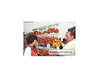 Рассада классических и экзотических сортов помидоров