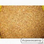 Насіння високоврожайних сортів коріандру
