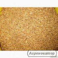 Семена высокоурожайных сортов кориандра