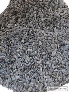 Продажа кондитерского калиброванного подсолнуха