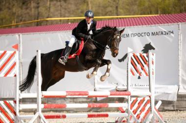 Кінь в спорт