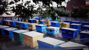 Срочно продам пчелосемьи