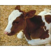 Продаю премікси(корм. добавки)для відгодівлі,свиней,птиці,ВРХ.AGRO-FЕE