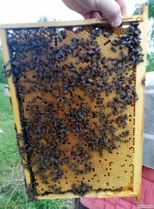 Бджолопакети з доставкою