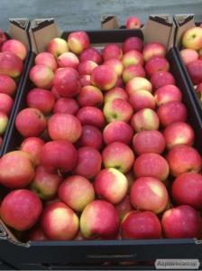 Яблука з Польщі виробник польська компанія Apple Mr