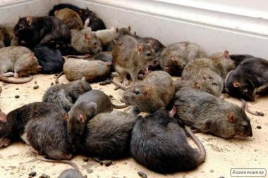 ВІДЛЯКУВАЧ ГРИЗУНІВ: щури, миші, кроти. Захист від збитків!