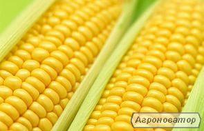 Семена кукурузы Кадр 267