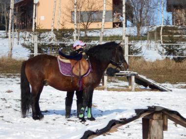 Верховые лошади породы Гуцульская