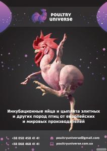 Инкубационные яйца и цыплята бройлеров, а также других пород птиц