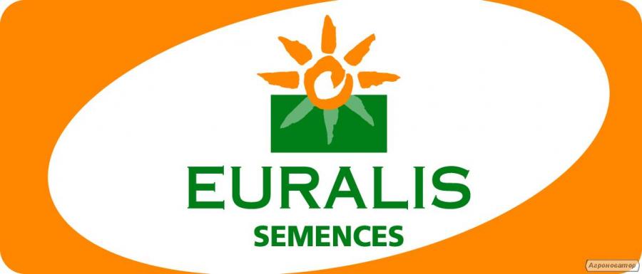 Семена подсолнечника Дарил (Евралис Семенс)