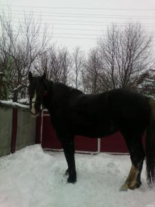 продам кобилу (коня)