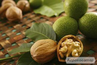 Cаженцы грецкого ореха в винницкой области