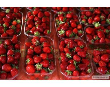 Бокс для ягод (панетка), Ящик для клубники