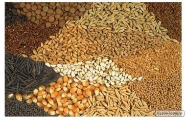 Высокоурожайные импортные семена