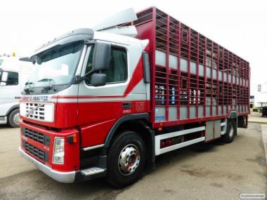 Перевозка крупно-рогатого скота по РФ и СНГ