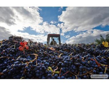 Продам Красное Вино, 160 тонн, Закарпатская обл.