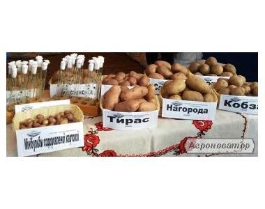 картофель продовольственный, товарный, семенной, фуражный, нестандартн