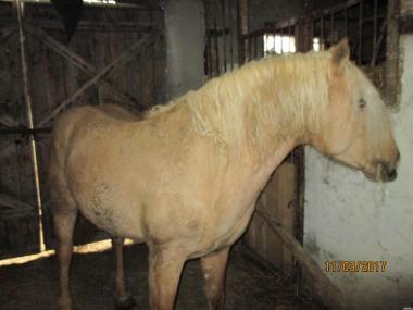 Продам коні