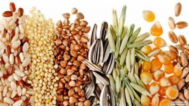 Закупка зерновых и масличных культур, семечка