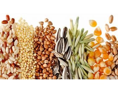 Закупівля зернових і олійних культур, насіння