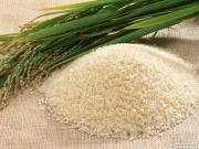 Український Рис оптом круглий і довгий ,від виробника НОВИЙ ВРОЖАЙ