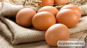 Продам яйцо инкубационное Ломан Браун от маточного поголовья