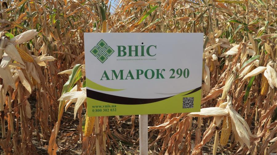 Семена кукурузы ВНИС Амарок 290 / Амарок 300