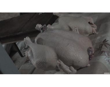 Индюшата суточные, яйцо инкуб.(белые шир.грудые)BUТ-8 доставка по Укр.