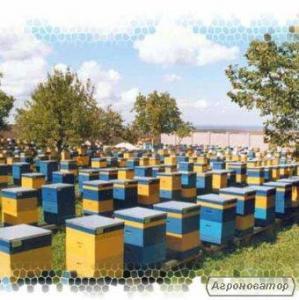 Продаю мед коріандр