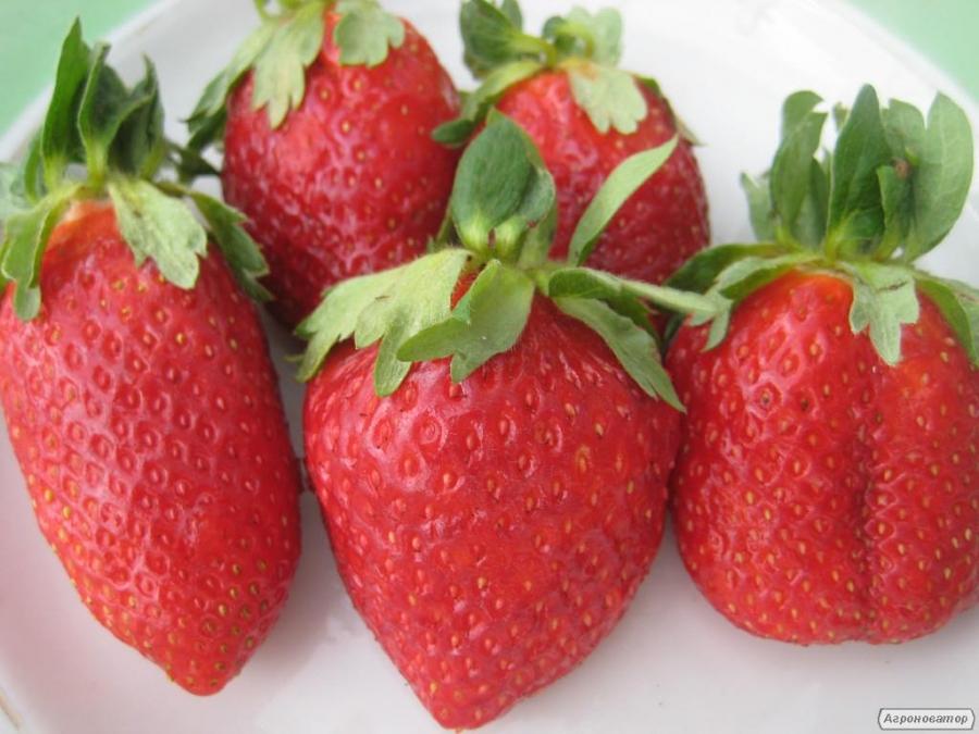 Продам розсаду елітних сортів полуниці