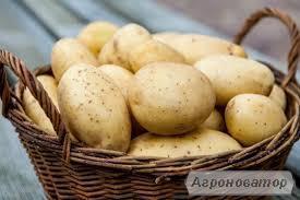 Продам домашний картофель