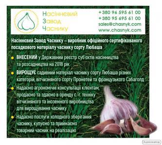 Продаем сертифицированный посадочный материал озимого чеснока сорта Любаша