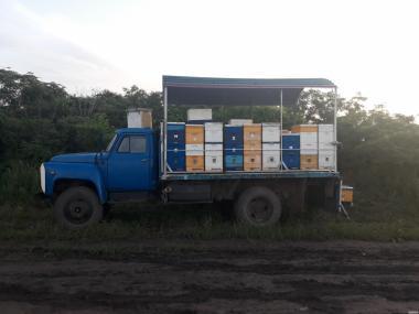 СРОЧНО продам кочевую пасеку ( пчелы, бджіл )