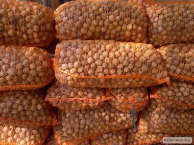 Продам бойный орех 2018 года
