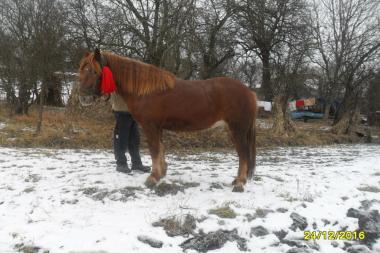 Продам коня великого срочно