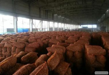 Грецкий орех - на экспорт. Затаможенный