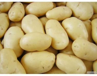 Картофель семенной из Беларуси