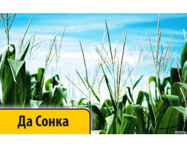 Гибрид Кукурузы ДА Сонка ФАО 350