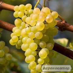 Кращі домашні вина з Бессарабії Одеська область