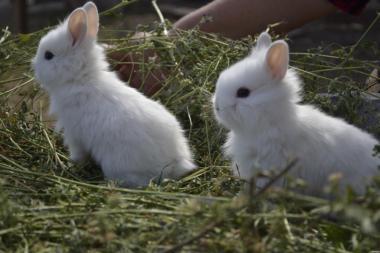 Продаю декоративные кролики